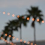 Palm trees with string lights in front