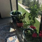 Plants in pots and rug