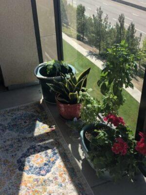 Plants, Plots, and Plodding Along